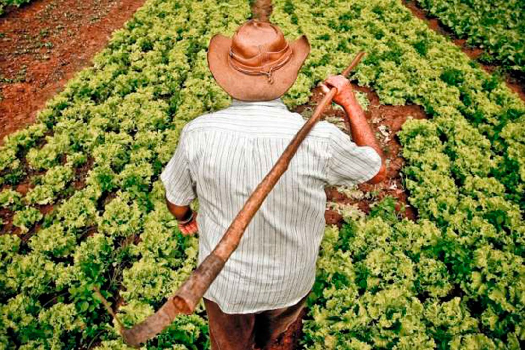 problemas-na-agricultura-familiar