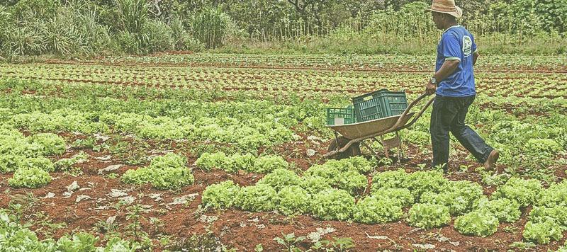 5 Dificuldades e problemas na agricultura familiar Brasileira.