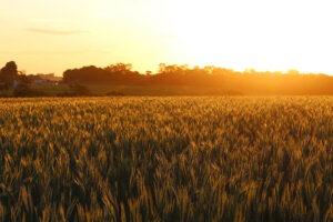 Biopesticidas-Novas-alternativas-elysios
