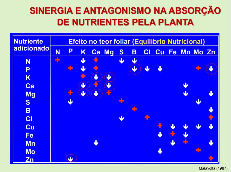 Sinergia e antagonismo na absorção de nutrientes pela planta. Autor: Malavolta, 1987.