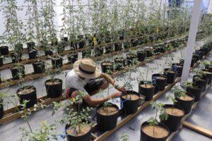 A dinâmica do microclima em ambientes protegidos