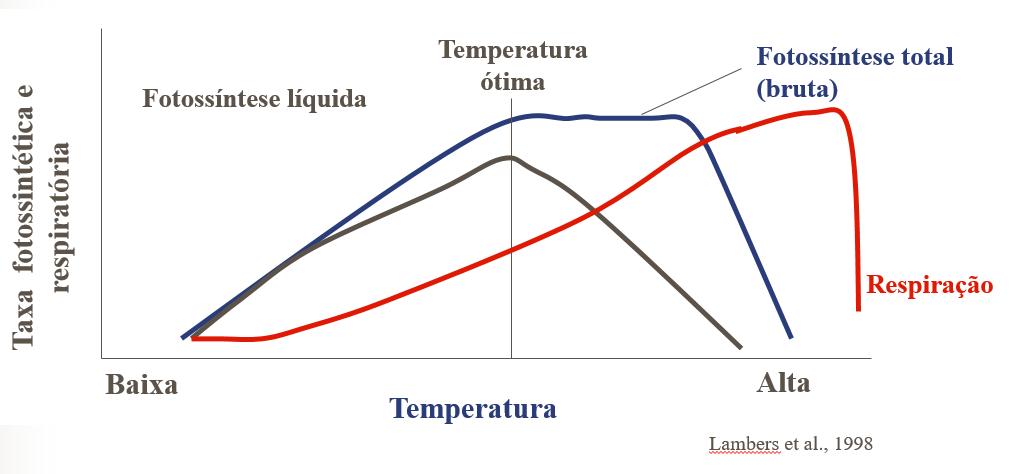 Influência da temperatura sobre a taxa respiratória e a fotossíntese líquida. Autor: Lambers, 1998.