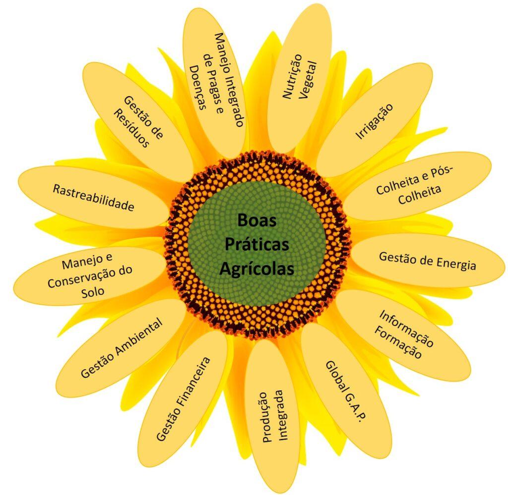 Boas Práticas Agrícolas: chave central para uma produção sustentável e de qualidade