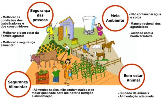 Benefícios da adoção de Boas Práticas Agrícolas. Fonte: FAO, 2007.