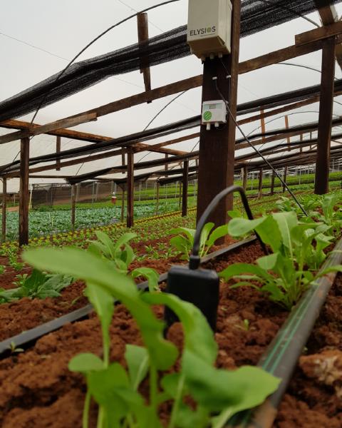 Sensores de umidade e temperatura do ar e solo instalados em estufa de hortaliças
