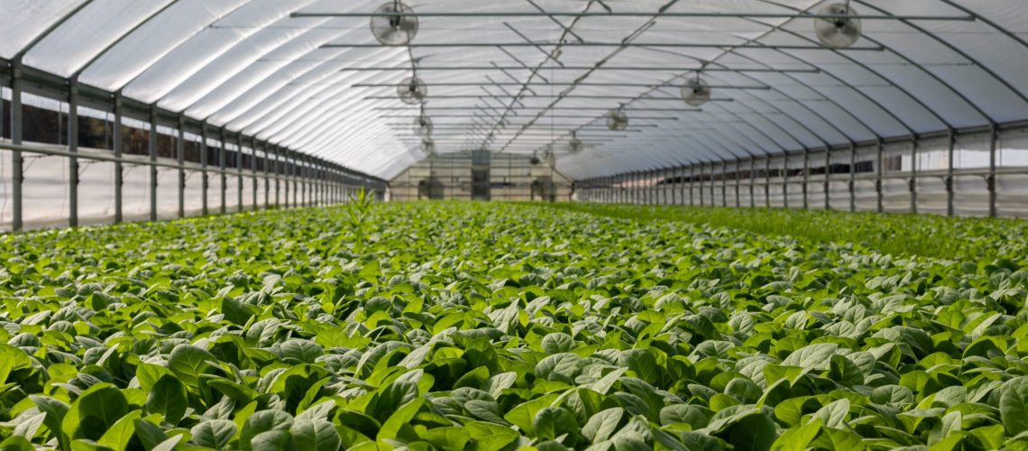 field-of-plants-in-greenhouse-2886937