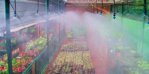 Microaspersores de nebulização em funcionamento.                                                                                    Fonte: NaanDan Jain Irrigation Ltd.