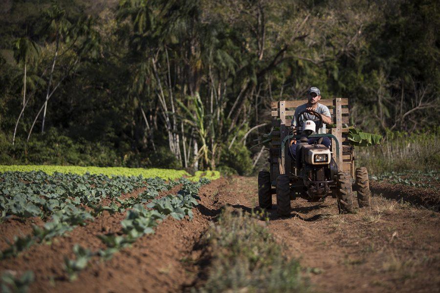 COOMAFITT, 2017. Terra de Areia/RS. Luiz Carlos da Silva Pizzolotto, agricultor bananeiro. Foto de Ubirajara Machado